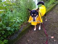 2ヵ月ぶりかな?リオ(犬)と散歩 - 化学物質過敏症・風のたより2