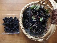 アロニアと梨ジャム、菜園の収穫 - 北緯44度の雑記帳
