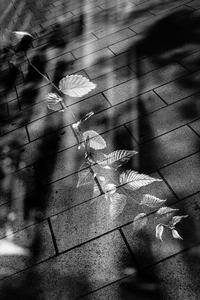 二重露光された酷暑の日の街路樹 - Silver Oblivion