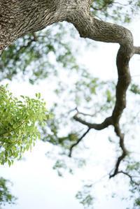 くすのき - ホンテ島 日記