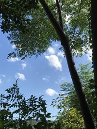 納屋Cafe9月のイベント・ご案内「ゆめじのお誕生会に向けて・・・」編 - 納屋Cafe 岡山