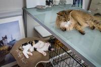 ノワとメル - おまけ猫たちとの日常