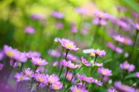 小さな花  - 風の彩り-2