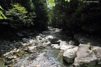 渓流に涼む - 虫籠物語