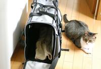タラ、耳掃除で通院 - サバとタラ