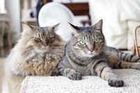 かわいがりたい猫なのに - きょうだい猫と仲良し暮らし