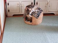 夏から秋にかけての猫ちぐら - きょうだい猫と仲良し暮らし