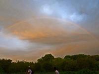 夕方見た虹 - ひな日記