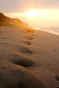 台風が運び去ったもの - Beachcomber's Logbook