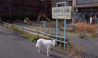 Vol.1384 塩浜町北公園 - 小太郎の白っぽい世界