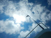 9月3日 まだまだ強い日射し。 - YDSブログ