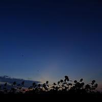 座間のひまわり夜明け前 - スナップ寅さんの「日々是口実」