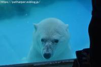 2018年8月 王子動物園3 その1 発泡スチロール協会お魚プレゼント - ハープの徒然草