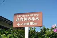 庄内柿の原木は鶴岡市鳥居町に有る - 「 ボ ♪ ボ ♪ 僕らは釣れない中年団 ♪ 」