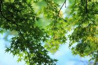 雲場池の秋が始まりました - 旧軽井沢より  つるや旅館からのお便り
