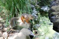 井の頭自然文化園2018年8月31日 - お散歩ふぉと