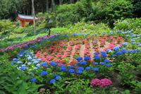 三室戸寺の紫陽花 - ぴんぼけふぉとぶろぐ2
