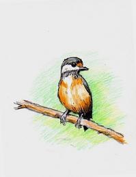 ヤマガラ・・・色鉛筆画 - 浅川野鳥散歩