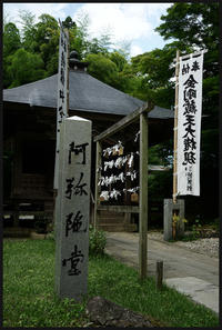 関山 中尊寺 -12 - Camellia-shige Gallery 2