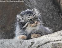 2018年8月王子動物園3その2小猫長屋 - ハープの徒然草
