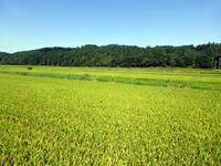 秋の入り口、野の実り - 田舎と孤独と私