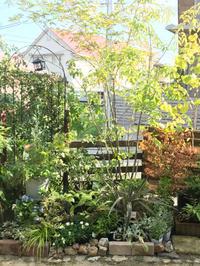寄せ鉢で美しい玄関に - 花の庭づくり庭ぐらしガーデニングキララ