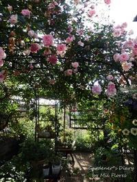 Amenazada por avispas - Gardener*s Diary