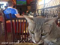 旅フォト:モロッコの猫 - 映画を旅のいいわけに。