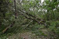 【緊急報告】ウトナイ湖の台風被害 - やぁやぁ。