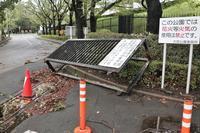 過ぎ去った台風21号 大宮公園を早朝散歩  - さいたま日記