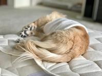 18年9月5日 可愛いおチリ&桃ちゃんにペロリン! - 旅行犬 さくら 桃子 あんず 日記