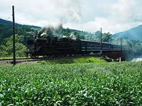 茶畑を走る - 風の香に誘われて 風景のふぉと缶