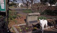 Vol.1385 塩浜町公園 - 小太郎の白っぽい世界