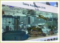 銀座の美ら海水族館♪ - ひびのこと