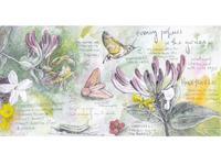 イブニング・パフューム グリーティングカード Evening Perfumes - ブルーベルの森-ブログ-英国カントリーサイドのライフスタイルをつたえる
