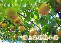 熊本梨平成30年度の樹上完熟梨『豊水』『あきづき』は9月11日(火)が最終発送です!お急ぎ下さい! - FLCパートナーズストア