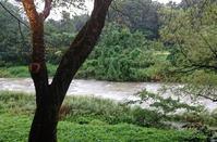台風が過ぎ去りました - 金沢犀川温泉 川端の湯宿「滝亭」BLOG