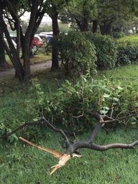 台風一過 - ジェンマとおっちゃんの日記2