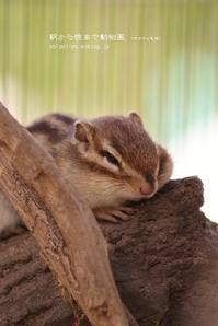 そろそろ起きて・・・ - 朝から晩まで動物園。(サファリもね)