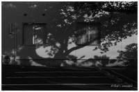 西日の影 - BobのCamera
