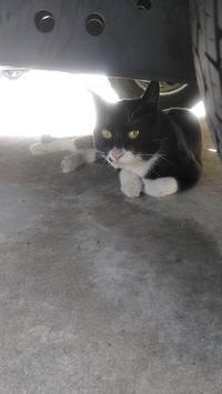 8月 活動報告 - 陽だまり猫の会