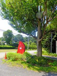 ル・コック9月6日(木) - しんちゃんの七輪陶芸、12年の日常