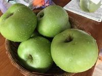 今年も「ブラムリ-アップル」に出会えた♪ - 本当に幸せなの?