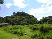 秋に向かって - 千葉県いすみ環境と文化のさとセンター