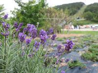 茶臼山高原【フォトムービーあり】 - yamatoのひとりごと