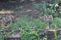 仲良し兄弟 - 動物園へ行こう