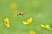 クレーム♪ - お花びより