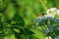 川べりの小径イチと星くん - 身近な自然を撮る