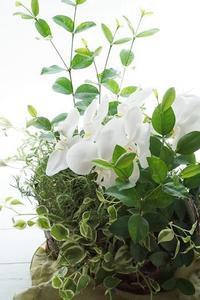 メルヘンな鉢植えコンポジション - お花に囲まれて
