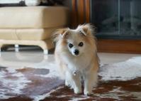 愛犬は18歳になりました♪ - きれいの瞬間~写真で伝えるstory~